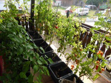 Und hier: Die Balkonfarm, die ohne Weiteres auch Blumen beherbergen könnte, worauf wir dieses Jahr verzichteten.
