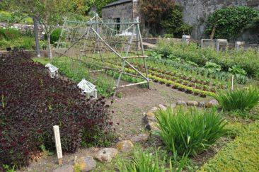 Immer wieder genre im Bauerngarten gesehen: Blumen und Gemüse nebeneinander oder gar in einem Beet zusammen. Davon profitiert nicht nur das Auge, denn Obst und Gemüse das bestäubt werden muss, wird durch diese Kombination zum Erfolg.