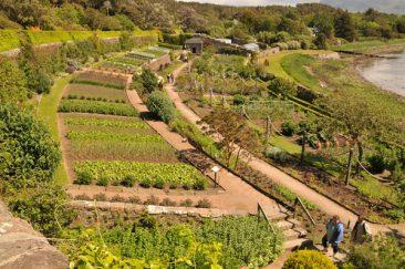 Kein Privatgarten, dennoch ein Beispiel wie gut so ein bäuerlicher Garten aussehen kann.