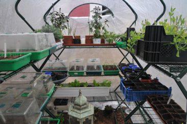 Weniger empfindliches Gemüse wird direkt im Freien gesät oder kommt in ein Zwischenlager wie dieses Foliengewächshaus.