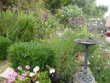 Vogeltränke, Buchsbaumhecke als Abgrenzun, Ein- und Mehrjährige, Kräuter, Tomaten bilden hier eine Einheit.