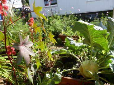 Gemüse und Blühpflanzen, erneut in friedlicher Eintracht.