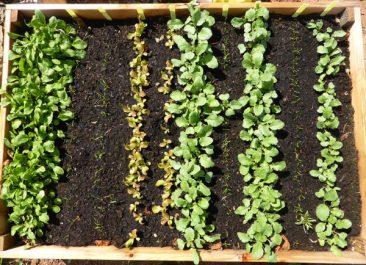 Zwar können im Februar die wenigsten Gemüsesorten direkt ins Freiland, dennoch geht so einiges in Sachen Aussaat.