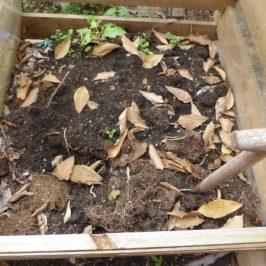 Kostenloser Kompost für den Bio- & Naturgarten