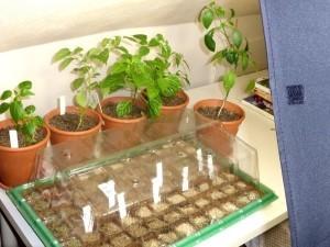 LED Pflanzenlampen und andere Leuchtmittel für die Anzucht von Pflanzen aus Samen