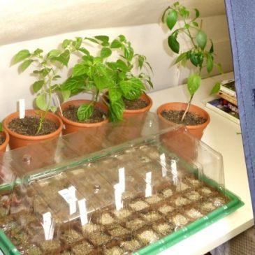 Anzucht leicht gemacht: Mit Pflanzenlampen mehr Erfolg