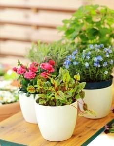 Pflanzen für den Balkongarten, ob Sonne oder Schatten