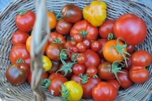 Garten und Balkongarten: Gartentipps für den Juli.