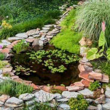 Gartenteich, Schwimmteich und Naturpool im Garten