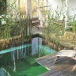 Gartenteich, Schwimmteich und Naturpool in Bildern
