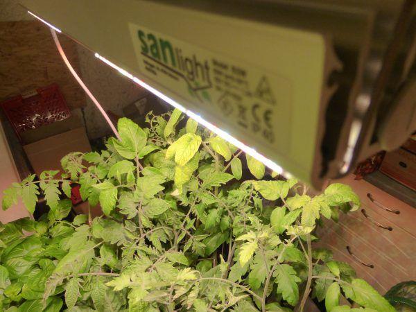 Anzuchtlampen und Pflanzenlampen von SANlight im Test