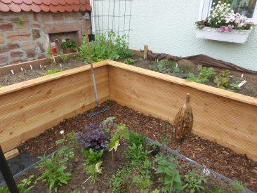 Und schon geht es wieder von vorne los. Hier in einem der 2 neuen Hochbeete im neuen Garten (Bauanleitung folgt)