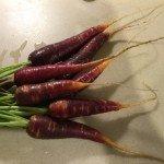 Karotte im Garten und Balkon anbauen