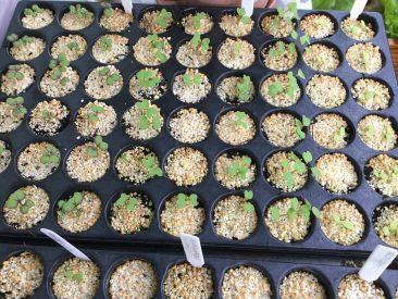 Von Februar bis Oktober könnt Ihr direkt oder vorsäen. Bei Salat, Fenchel, Kohlrabi und Co. finde ich die Vorsaat viel praktischer. Aus den Multitopfplatten zur Anzucht nehme ich immer dann etwas raus, wenn ein Plätzchen frei ist.