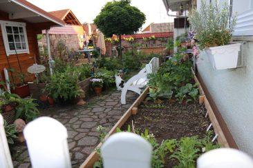 Das vordere Hochbeet und links übrigens welche für Blühpflanzen, ebenfalls auf dem Pflaster, mit Unkrautvlies darin und upgecycelt aus dem alten, aber noch brauchbaren Terrassenholz.