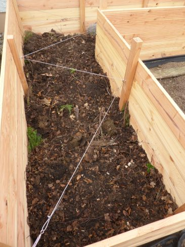 ... darauf Laubkompost vom Nachbarn. Kann, muss aber nicht und der Nachteil: Die Hochbeeterde sackt mit der Zeit ab. Gerne 20 cm in einer Saison.