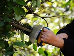 Sträucher richtig schneiden: Anleitung für Sommerblüher, Frühlingsblüher und Zwersträucher wie Lavendel