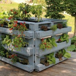 Buchtipp: DIY-Projekte in Sachen Vertical Gardening
