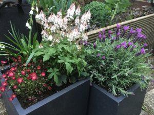 Balkonkästen Töpfe und Kübel richtig bepflanzen und Erde wie Spezialerde sparen