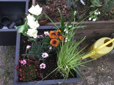 Nur noch richtig gut angießen und die Pflanzen wachsen lassen.