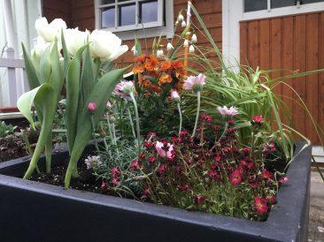 Gepflanzt wird, was gefällt und das üppig. Wenn die Tulpen nach dem Einziehen richtig Kraft in den Zwiebeln gesammelt haben, dann tausche ich auch diese gegen einen Sommerblüher aus.