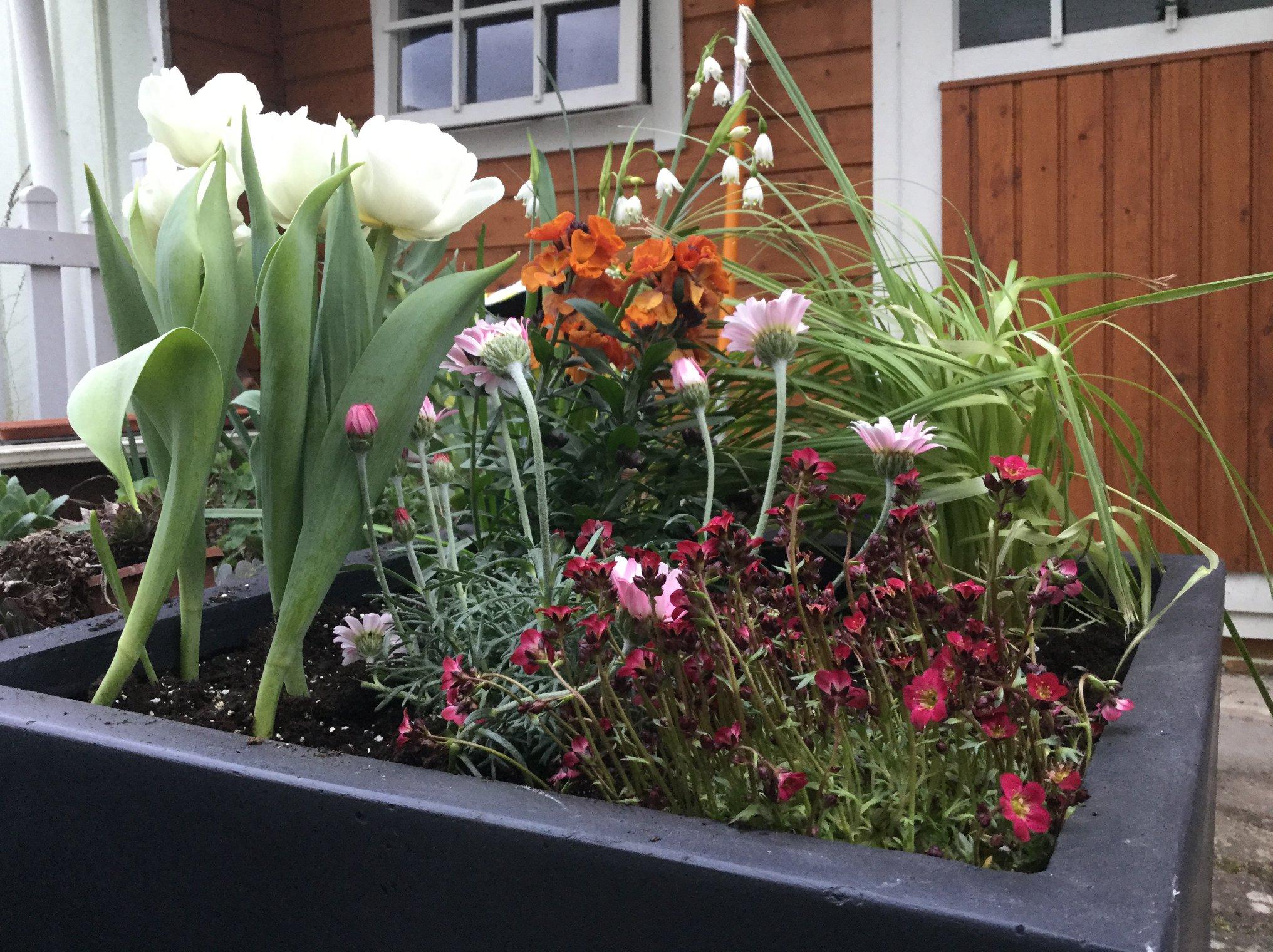 richtig bepflanzen beautiful hochbeet befllen with richtig bepflanzen affordable die ersten. Black Bedroom Furniture Sets. Home Design Ideas