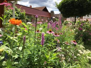 Der Garten im Sommer: Ernten säen, genießen und Gartenarbeiten