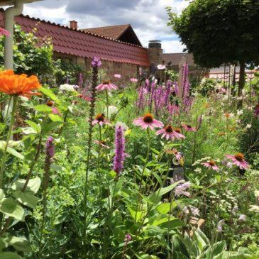 So wird der Sommer im Garten und auf Balkonien zum Vergnügen