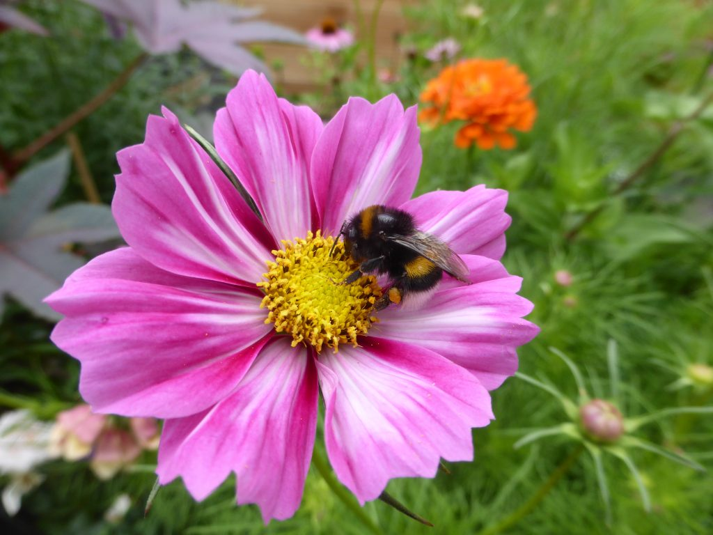 Garten im Sommer und Artenvielfalt fördern