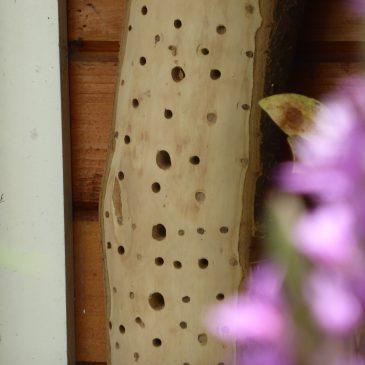 Insektenhotel bauen Anleitung und Buchtipps