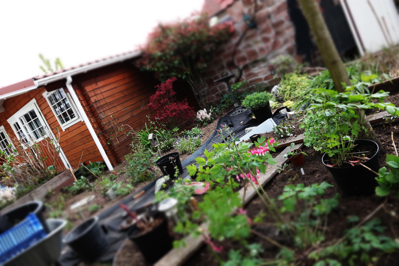 Garten neu anlegen die Kosten
