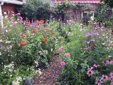 Ein vielfältig angelegter Garten, im Beispielbild der Blick aus unserer Haustür, mit heimischen und nichtheimischen, vor allem aber mit offenblütigen Nektar- und Pollenspender hilft den zahlreichen bestäubenden Insekten und macht auch einen kleinen Garten zu einem bienenfreundlichen Garten.