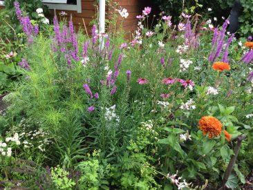 ... hinter üppigem Blütenflor. Tipp: Keine Angst vor hohen Stauden und EInjährigen im kleinen Garten haben!