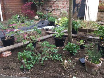 Das war dann auch nötig, denn die Pflanzen wuchsen und gedeihten.