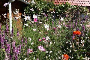 Bienenfreundlichen Garten neu anlegen
