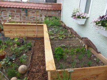 Ab März vorgezogene Pflanzen wie die ersten Salate durften in den neuen Hochbeeten platznehmen.