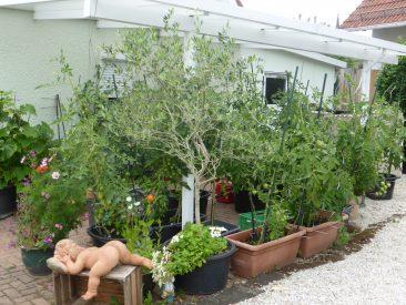 Sprung in den Mai: Der Tomatencarport.