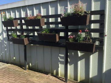 Diese beiden Futterpflanzen habe ich an einer Palette gepflanzt, die an der Garage hängt. Gärtnern auf kleinstem Raum und den vorhandenen Platz ausnutzen.