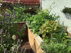 Hochbeete selber bauen und auch auf kleinem Raum Gemüse anbauen