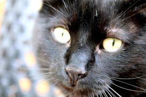 Spot Ons für Hunde und Katzen: Gift für die Natur?