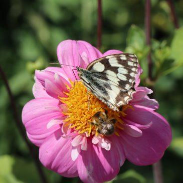"""Giftfrei Gärtnern: Warum """"bio"""" im Garten und auf dem Balkon sinnvoll ist"""
