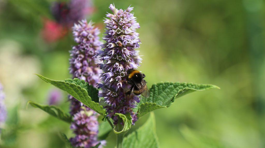 Der Hochsommer ist Schnäppchenzeit, auch und gerade für Gärtner. Da gibt es jede Menge Prozente auf alles Mögliche für den Garten. Und das hat seine Vorteile.