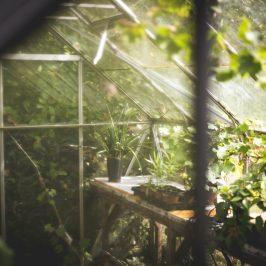 Hochsommer: Wenn Gartenfans saftige Rabatte nutzen können