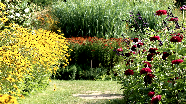 Wo Pflanzenliebhaber auf ihre Kosten kommen: Sichtungsgarten Hermannshof