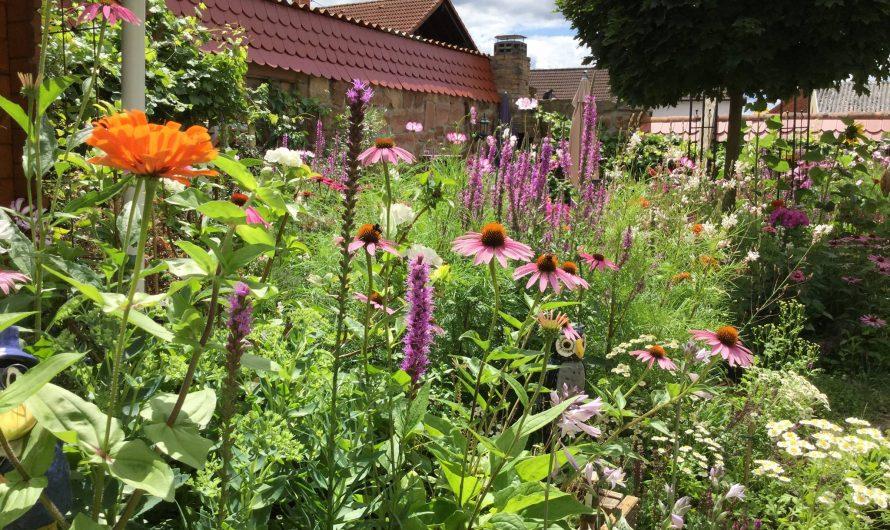Wasser im Garten: 8 hilfreiche Tipps, um in Zeiten des Klimawandels Gießmenge zu reduzieren