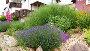 Beete mulchen reduziert Wasser Bedarf im Garten