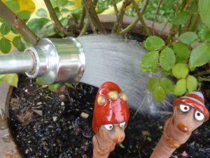 Garten richtig gießen reduziert den Bedarf an Wasser