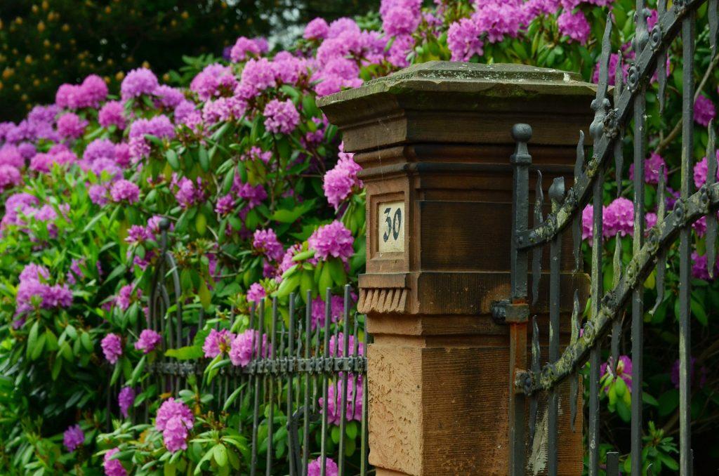 Gartenzaun Gabionen Stabmattenzaun oder Metallzaun und schöne Begrünung2