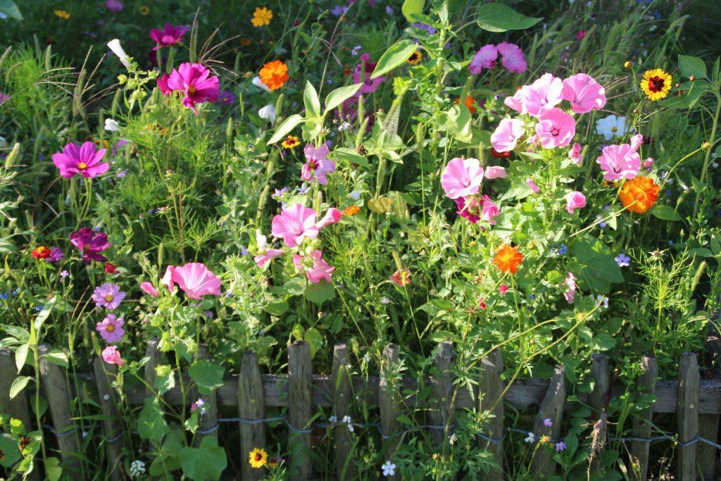 Gartenzaun Gabionen Stabmattenzaun und schöne Begrünung