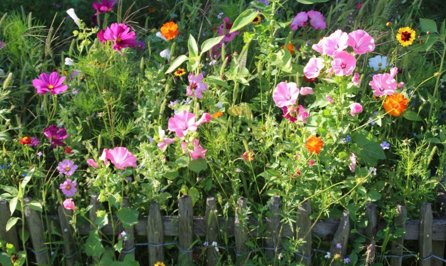 Gartenzäune müssen nicht spießig sein – die besten Tipps